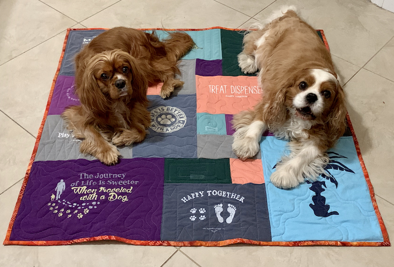 dogs on quilt